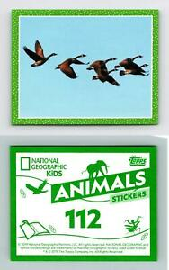 Canada Geese #112 National Geographic Kids Animals 2019 Topps Sticker