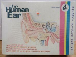 The Human Ear Natural Science Series  Lindberg Line No.1314 020121DBT