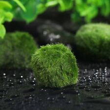 Aquatic Acuarios Decoracion Planta viva Bola verde Pelota de musgo Marimo