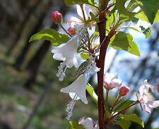 Boucles d'oreilles fleurs perce neige bijoux angelique blanc forêt sorcière elfe