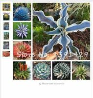 MIX 100pcs/bag agave seeds Succulent Plants bonsai balcony flower Agave