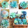 Artificial Plants Faux Succulent Cactus Aloe Party Home Wedding Garden Decor