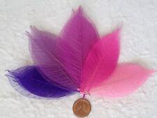 50 Skeleton Leaves assorted Fuchsia Pink Purple Plum Primrose see through leaf