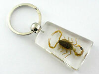 Real Insect Keychain in the clear acrylic, scorpion