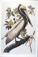 Audubon  - Ltd. Ed. Loates  Brown Pelican Print Signed