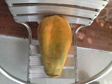 Papaye graines de papaye Geant