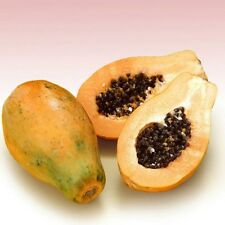 PAW PAW Fruit seeds 10+ Seeds Tropical Fruit Fast Growing In The Garden