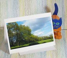 """Carta: """"gli Alberi di pioppo, Nebbia Lane Park, Manchester"""" #peterbrighousephotography"""
