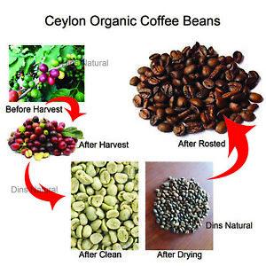 Organic Ceylon Arabica Fresh Roasted Coffee Beans  from sri lanka