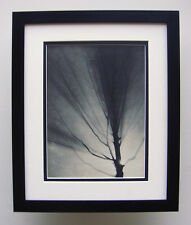 "WOW 1930s BRASSAI Vintage Photogravure ""Lonely Tree in the Night Sky"" Framed COA"