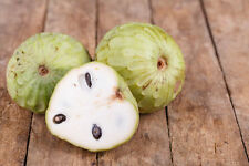 Cherimoya Chirimoya Annona Cherimola Custard Apple Seeds 10 PCS