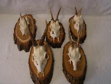 Lot of 5 Vintage German Deer Antler on Country Style Wood Base #QB3