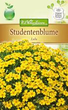 Studentenblume 'Lulu' - Tagetes tenuifolia, ca. 100 Samen 5265
