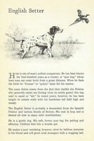 English Setter - 1950 Vintage Dog Print - Matted