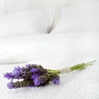 4 Pack Aromatherapy Lavender Infused Medium Firm Pillows 50cm x 75cm