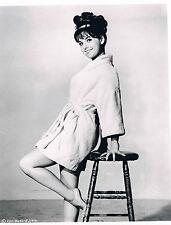 Dawn Wells Original Black and White Publicity Photograph 10 x 8 CPC-B692-R1144