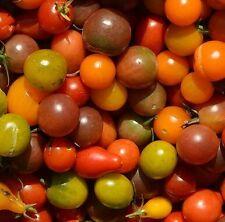 ☺100 graines de tomates cerises (5 variétés  mélangées )