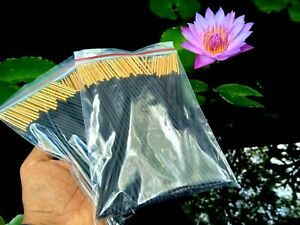 Incense Sticks 100 Bundle Hand Dipped Premium Indoor Outdoor 100% Quality.