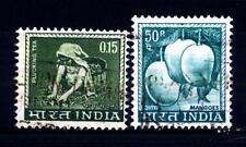 INDIA - 1965-1967 - Raccolto del tè  -  Manghi