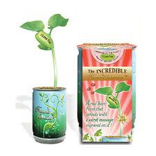 DIY Magic Beans I Love You Hidden Message Easy Growing Plant Can Indoor Outdoor