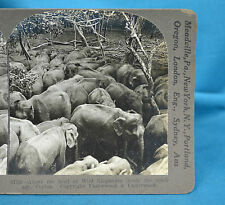 Stereoview Ceylon Sri Lanka c1910 Herd Of Wild Elephants In Stockade