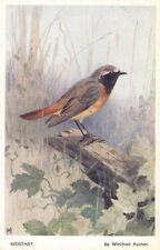 BIRD : Redstart - WINIFRED AUSTEN -VALENTINE'S