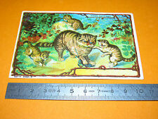 CHROMO BON-POINT ECOLE 1900-1914 CHAT SAUVAGE CHATONS FELINS ANIMAUX MAMMIFERE