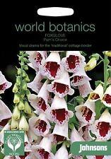 Johnsons World Botanics Flower - Foxglove Pam's Choice - 500 Seeds