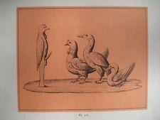 Gravure XXè - Groupe d'animaux - Planche 54  - 1959