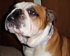 """Black Swarovski Crystal Rhinestone Dog Collar Fits 18-22"""" Necks"""