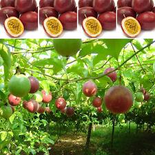 40PCS Tropical Exotic Vine Passion Purple Passiflora Edulis Fruit Plant Seeds
