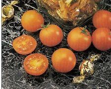 Sunsugar Golden Cherry Tomato - 20 Seeds