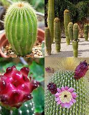 Neobuxbaumia Polylopha rare cactus exotic succulent cacti cereus SEED - 15 SEEDS
