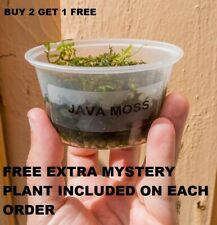 BUY 2 GET 1 FREE Java Moss Freshwater Live Aquarium Plants planted tank aquarium
