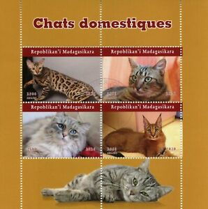 Madagascar Cats Stamps 2020 CTO Cat Domestic Animals Pets 4v M/S