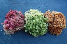LIVE Sphagnum Moss for carnivorous plants! QUART bag MIX Orange Green Red