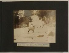 1910s-20s Western Wildlife Photo Album by Noted Astronomer William Wright