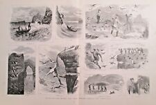 Birds, Puffin Catching On The West Coast Of Ireland, Vintage 1886 Antique Print