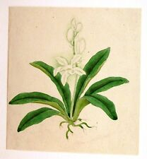 ANGLO CHINESE FLOWERS(1) W/COL C1860