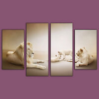 Family of White Lions - Large 4 Piece Animal Canvas Print Wall Art Ready To Hang