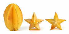 Thai Star Fruit 15 Seeds Carambola Exotic tree Genuine 100%  M151
