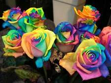 Semillas de Rosa Rosal ARCOIRIS RAINBOW ROSE SEEDS flor color colour iphone sony