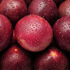 40x Tropical Rare Exotic Passion Fruit Seeds Passiflora Edulis nutritious Fresh.