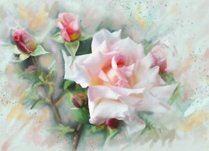 Water Colour Pink Rose Flower Painting Wall Art Large Poster / Canvas Picture