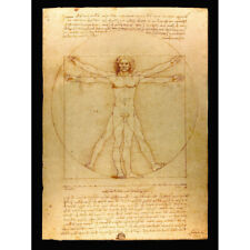 Da Vinci Vitruvian Man Human Proportions Diagram Canvas Wall Art Print Poster