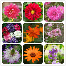 30pcs Dahlia Seeds Mix Color Flower garden perennials plant
