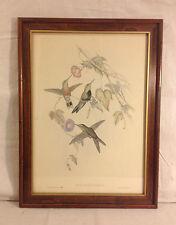 ANTIQUE J.C. GOULD  & H.C. RICHTER HANDCOLORED LITHO / SPORADINUS ELEGANS 1850'S