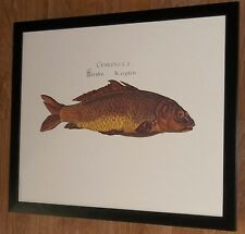 Danubis II Fish poster print - 20x16'' frame - high quality vintage carp print