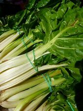 250 BARESE SWISS CHARD White Rib Perpetual Spinach Beta Vulgaris Vegetable Seeds