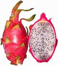 Pithaya HYLOCEREUS UNDATUS - 12 Semillas - Rara Fruta Jardín - Garden Samen Semi